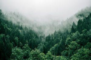 Wald CO2 Abfallguru Mülltrennung