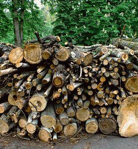 Holz als Rohstoff Holz entsorgen Abfallguru Mülltrennung